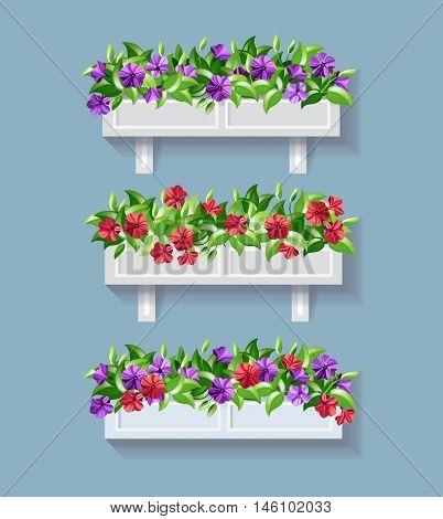 Window flower box. Red and Purple Petunia vector illustration.