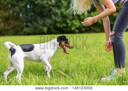 Young Girl Plays With A Dog