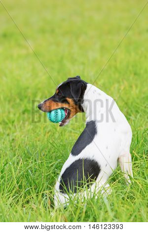 Dog With A Ball In The Snout