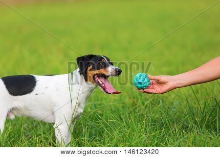 Woman Handing A Toy To A Dog