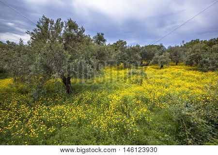 Ecological Olive Grove Greece