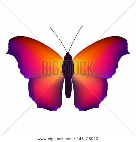Beautiful butterfly with colorful wings on a white background.