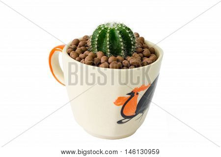 Small Cactus In A Cup Of Chicken Pattern