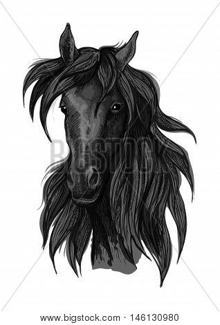 Arabian horse head sketch of black purebred racehorse mare. Use for horse racing badge, equestrian sport symbol or t-shirt print design