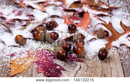 Close up view of seasonal autumn leaves and acorns with snow on rustic wooden boards. Selective focus on front acorns.