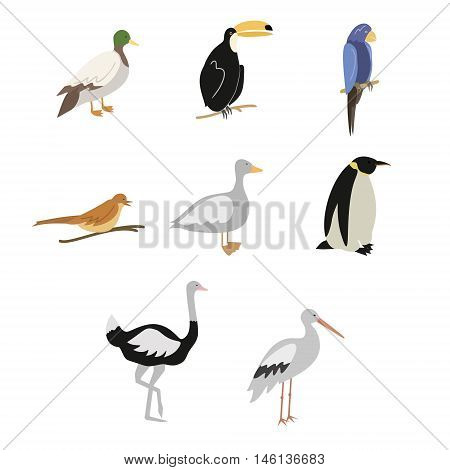 Vector set of colored cartoon birds isolated on white background. Set of colorful flat birds icons of ostrich, penguin, nightingale, duck, stork, toucan, parrot, goose