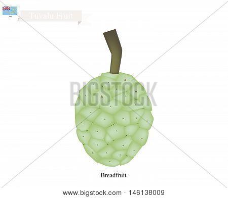 Tuvalu Fruit Screw Pine Pandanus Tectorius or Pandanus Odoratissimus. The Native Fruit in Tuvalu.