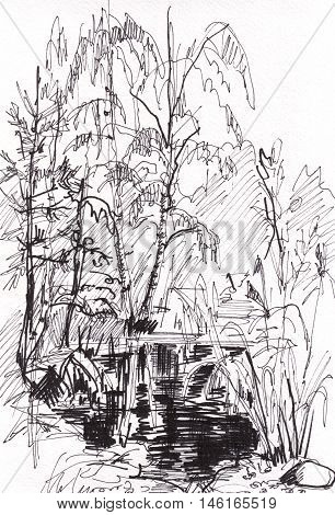 The instant sketch pond surrounded by trees
