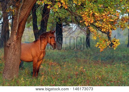 Horse In The Autumn Forest