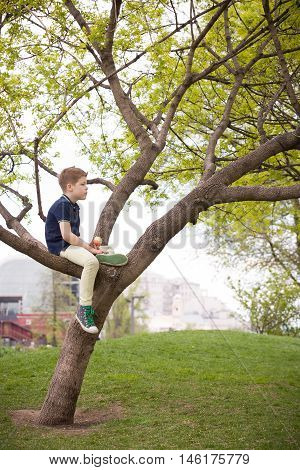 Cute kid boy sitting on the big tree in the park on a spring or summer day. Child climbing the tree in the city garden. Active boy walking in the park.