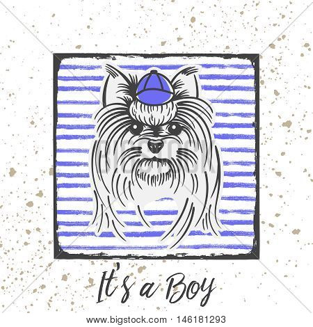 Yorkshire Terrier with a cap.Hand drawn portrait with the inscription-It s a Boy.
