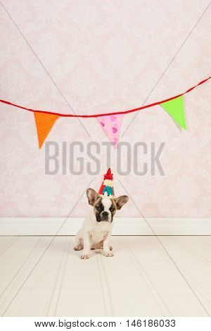Little dog is having a party with paper chain