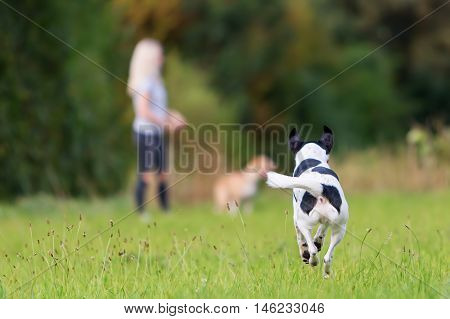 Running Dog With A Girl In The Background
