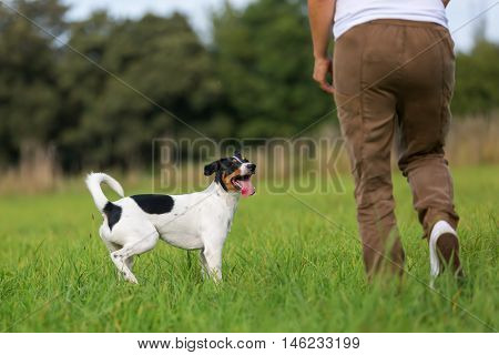 Woman With A Dog On The Meadow