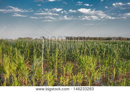 irrigation pivot watering a field of corn