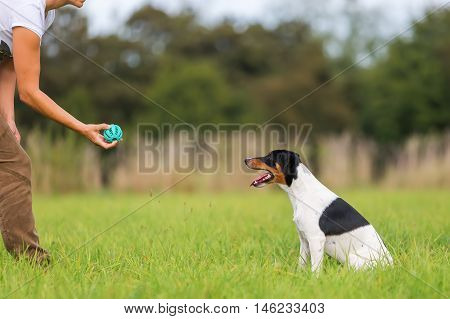 Woman Playing Ball With A Dog