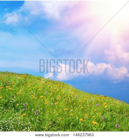 wild flowers in a meadow. The hills are covered with lush grass, daisies and blue flowers in the sunlight. against the blue sky with clouds