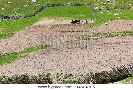 Traditional Georgian Farming. Ushguli Village. Upper Svaneti. Georgia.