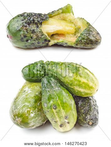 Rotten and moldy cucumbers isolated on the white background poster