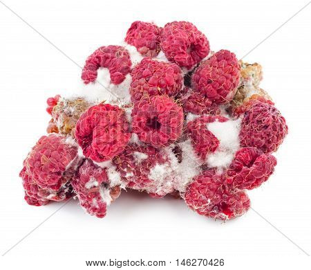 Rotten and moldy raspberry isolated on white background