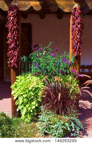 Garden with hanging Chili Peppers which is a New Mexico cultural tradition