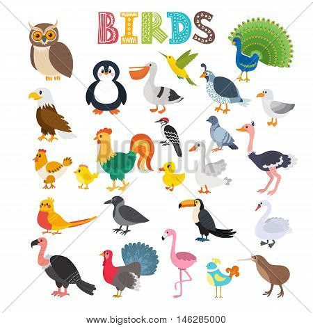 Vector Illustration Of Different Kind Of Birds. Cute Cartoon Birds