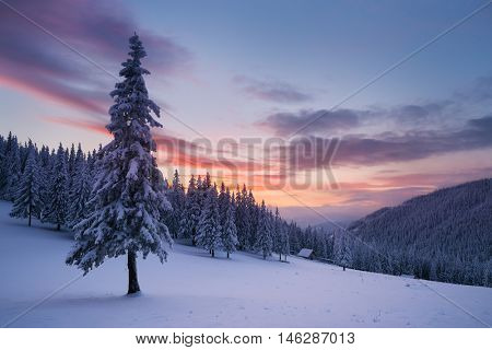 Christmas view. Winter landscape with fir trees in the snow. The wooden house in a mountain forest. Beautiful fabulous evening. Carpathians, Ukraine, Europe