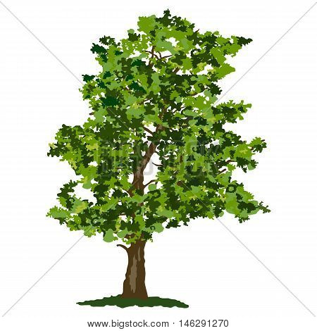 Abstract summer green broadleaf tree vector illustration isolated on white background