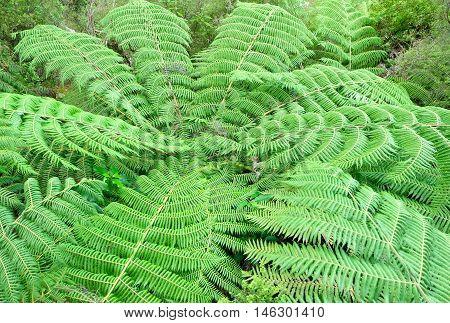 Tree Fern Canopy.  Abel Tasman National Park, New Zealand