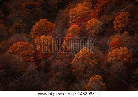 Colorful field of trees on the side of a mountain during fall foliage