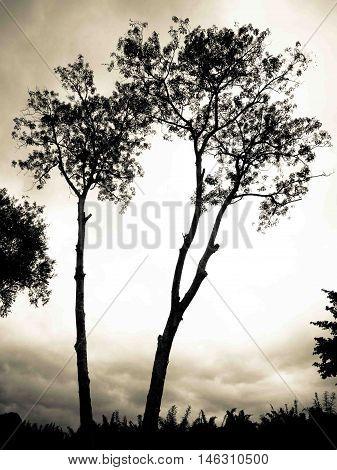 Silhouette tree dark shape dim light contour