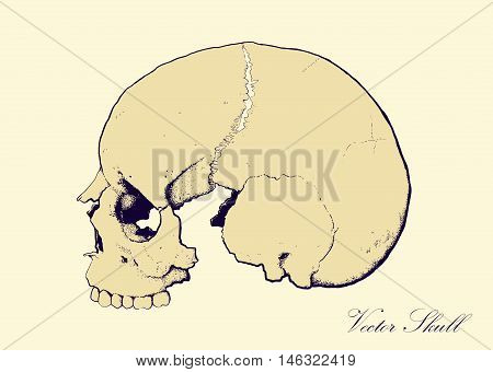 skull on retro colors backgrounds seen in profile, without lower jaw