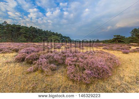 Hoge Veluwe Heathland