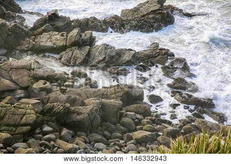 Seals On A Rocky Coastline In Westport, New Zealand