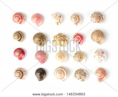 Seashells, White Background