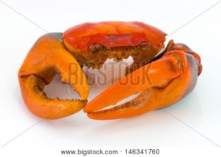 boiled crab shell and craw isolated on white
