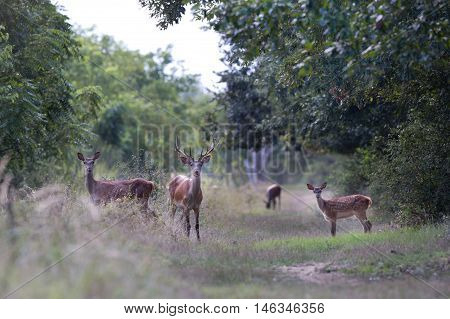 Red Deer Family