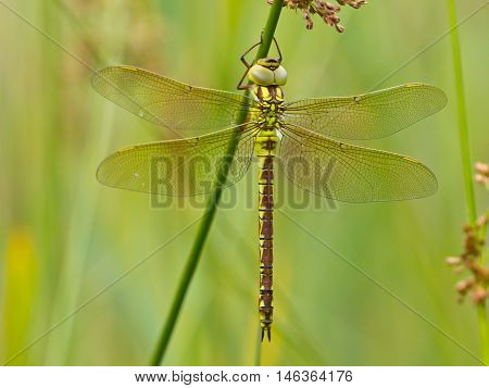 Dragonfly Resting On A Leaf