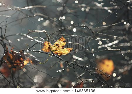 autumn leaf which stopped falling on branches