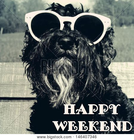 Dog in sunglasses with text quote: Happy weekend