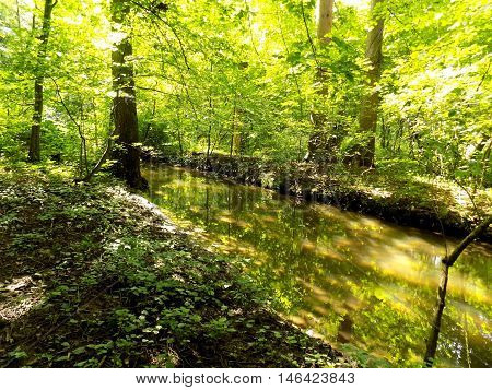 Creek in deciduous forest in wild nature