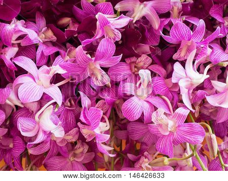 Close-up view of a pile of beautiful purple Dendrobium orchid at the flower market. Flower background.