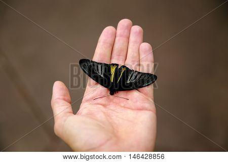 Dunedin, New Zealand - Febr 10, 2015: Butterfly Sitting On Woman's Hand. Larnach Castle Garden,