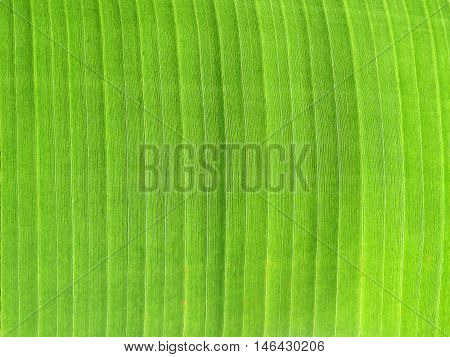abstract and close-up of green leaf elements of design