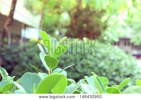 Top leaves weakens, Plant, Macro, green plant