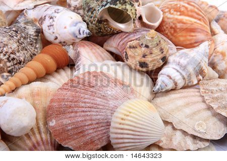 Bunch of Sea Shells