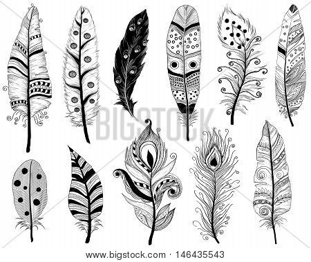 Hand Drawn Doodles Vector Illustration Of Ethnic Feathers