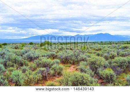 Desert Plateau with Sagebrush and Juniper Trees taken in Northern New Mexico near Taos, NM