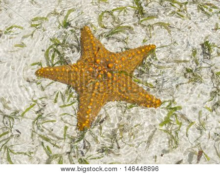 Starfish in shallow water Zanzibar Indian ocean