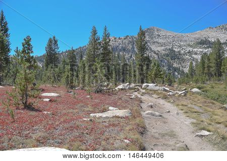 Hiking Trail with Red Ground Cover: hiking trail on the way to Lake Elizabeth, in Tuolumne Meadows